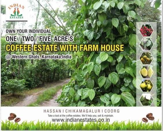 Coffee estate & plot