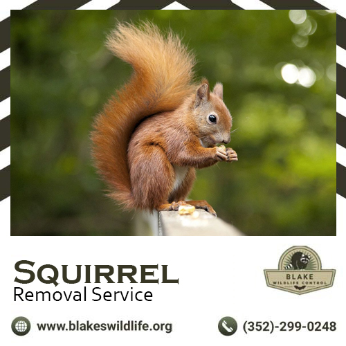 If you live in an area, where you have lots of rural areas surrounding you, you are sure to have squirrels and other tiny creatures stopping by your attic or garden once or twice. to avoid that hire a pro for a squirrel removal service, so you can avoid i