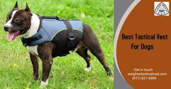Best tactical vest for dogs